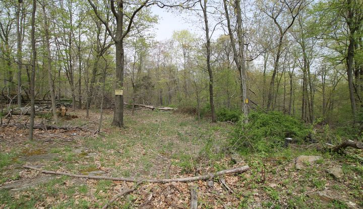 West Mt Airy Road - Image 1