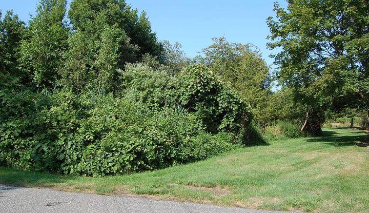 V/L 57 Watchogue Avenue - Image 1